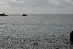 A whale in Geographe Bay